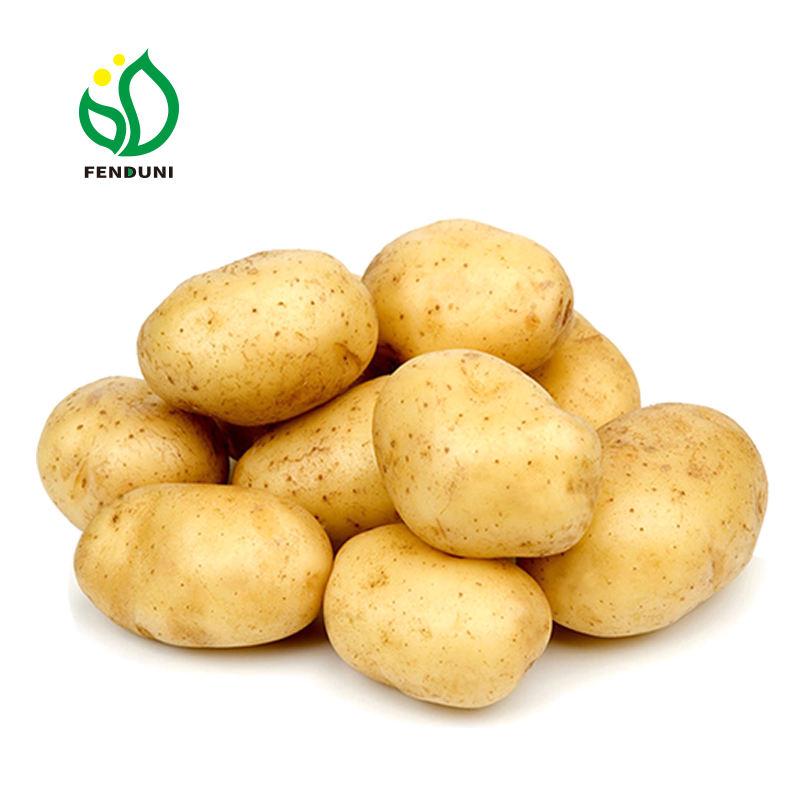 Organic Holland Sweet Potato Seeds from China