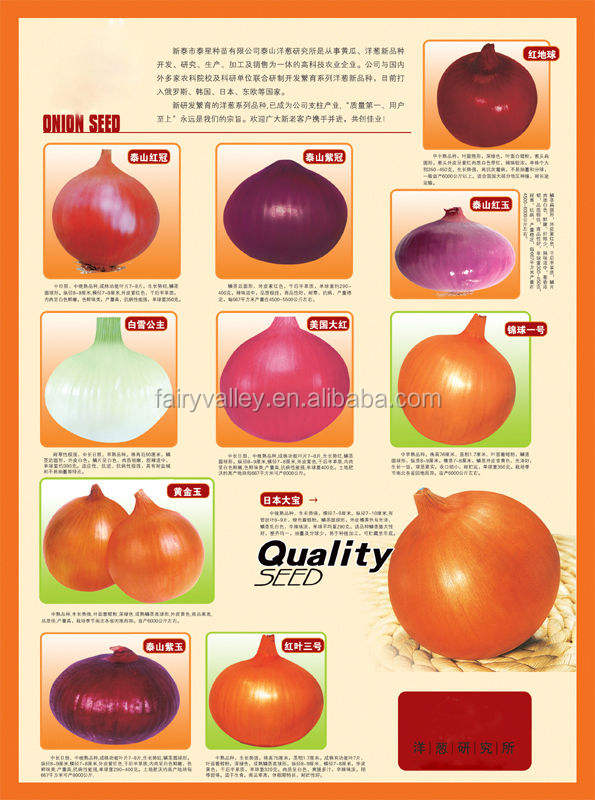 Chinese High Quality F1 Hybrid Red White Yellow Purple Onion Seeds For Growing