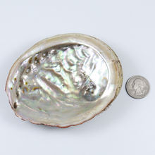 Natural Craft Sea Raw Abalone Shell For DIY Home Decoration