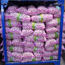 fresh garlic for malaysia & lowest price