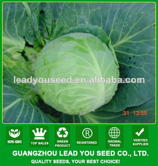 C53 Todos f1 família híbrida 55 dias sementes de repolho, sementes de repolho híbrido