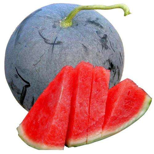 Black skin red flesh seedless watermelon seeds on wholesale price