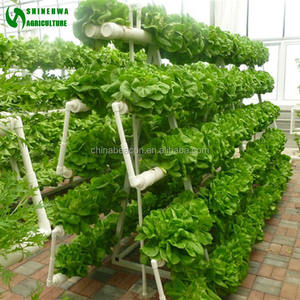 Commercial Hydroponic Agricultural lettuce NFT Greenhouse