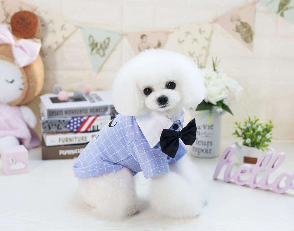 KOMAY White Collar Black Bow Tie Dog Vests Spring Pet Clothes T-shirt Dogs Summer Teddy Shirt Jersey Puppy Clothing Apparel
