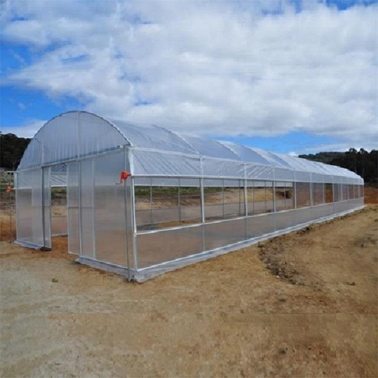 Galvanized steel Frame Single span PE Film greenhouse for Agriculture Low cost Tunnel greenhouse for flowers plant