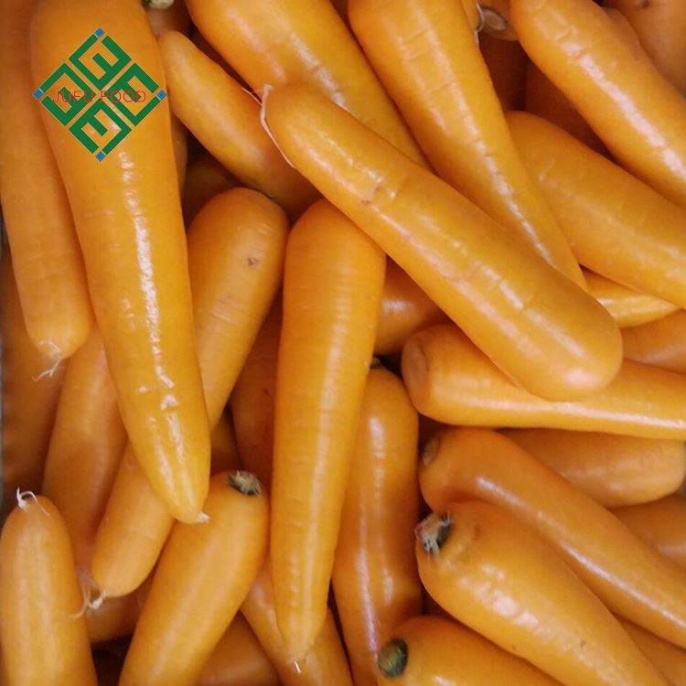 carrot export from china farm natural fresh carrot