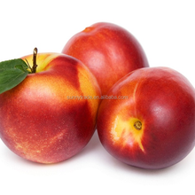 Export fresh peach with high quality