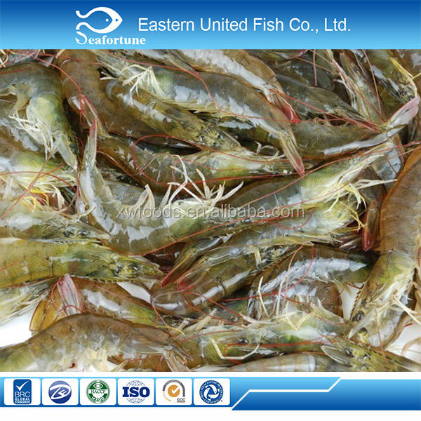 chinese sea frozen frozen shrimp importers