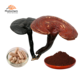 300 mesh super reishi mushroom powder factory wholesale