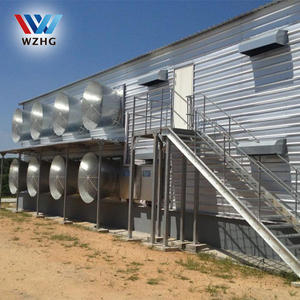 Industrial poultry farm commercial chicken house
