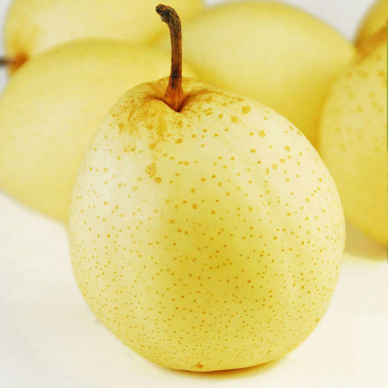 Chinese fresh yellow Ya pear