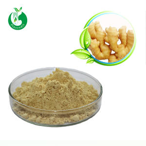 Ginger extract powder ginger extract gingerol ginger root extract