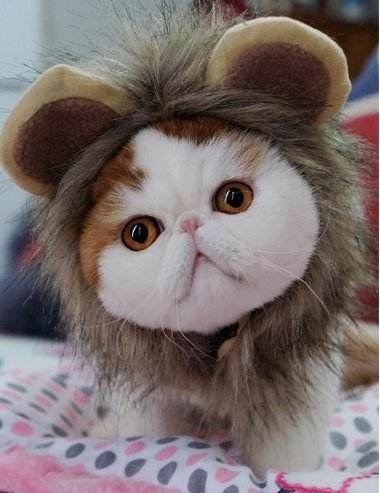 Cat Costume Funny Lion Mane Wig for Party Dress Up Small Dogs with Bell Charm Hat