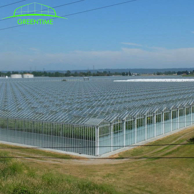 Complete glass agricultural greenhouse turnkey project with quick construction