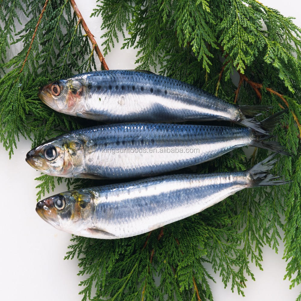 Quality Frozen Pacific Mackerel Fish