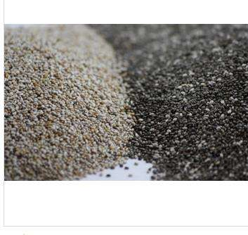 High Quality Chia seed Organic