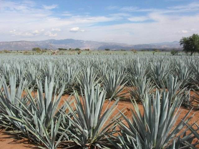 CREATE YOUR OWN BRAND TEQUILA, WINES AND SPIRITS FROM MEXICO