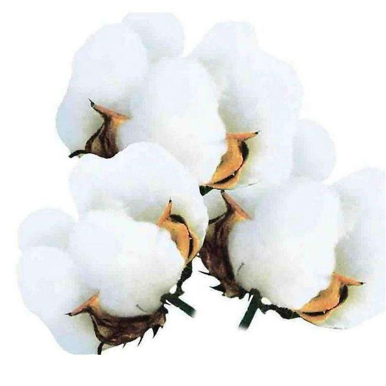 LUZADUOKANGWNAG Chinese best Cotton seeds for growing
