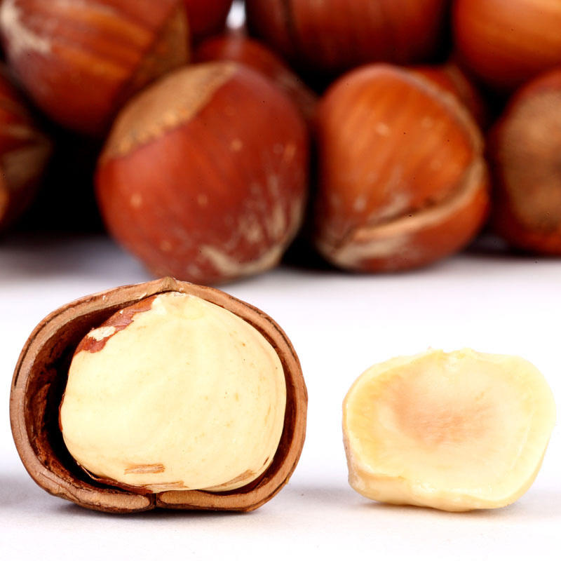 Chinese suppliers roasted hazelnut, Cobnut/Dry Hazelnuts for sale
