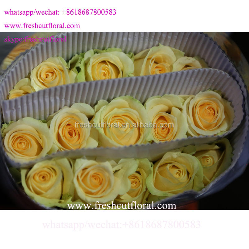 Best Wholesale Distributors Of The Highest Quality Fresh White Roses Cut Fresh Flowers Flower Bouquets For Weddings