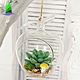 Wholesale Decorative Apple Shaped Clear Glass Globe Hanging Air Plant Terrarium glass Planter