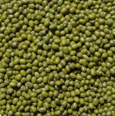 Green Mung Bean yellow mung bean organic green mung bean dried mung bean small green bean fresh green mung bean crop green mung