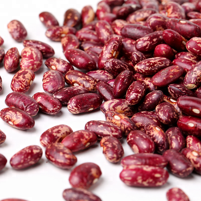 Hight Quality Red Speckled Kidney Bean with Good Price