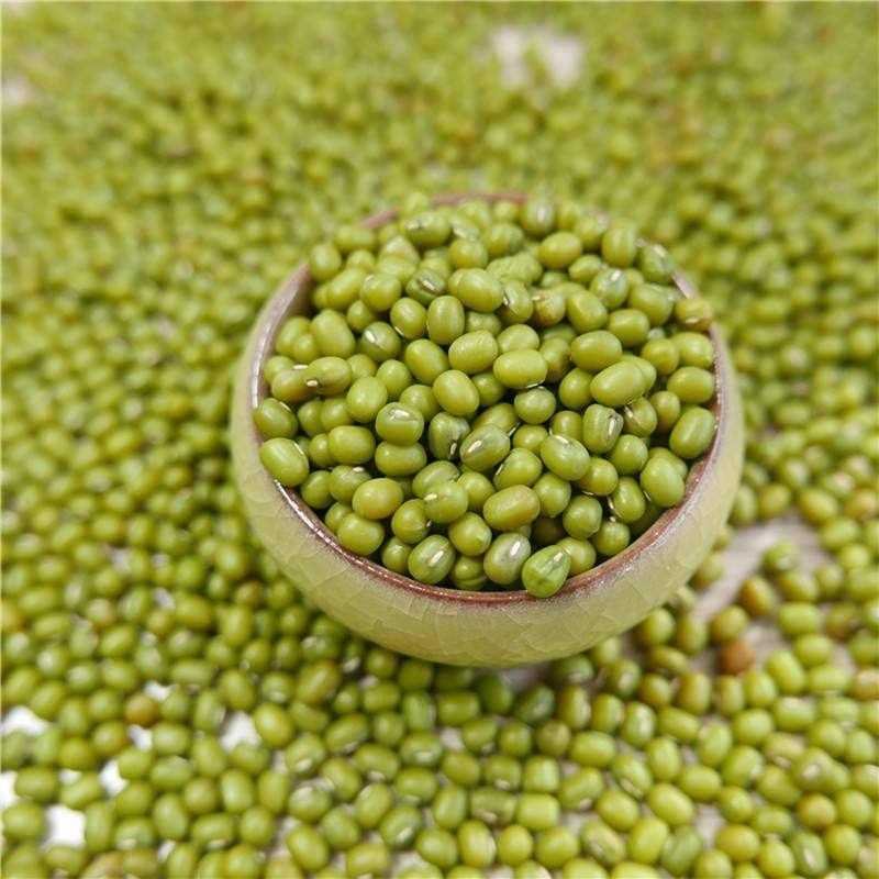 prime quality Green Mung Beans for sprouting,MC,2019 type,