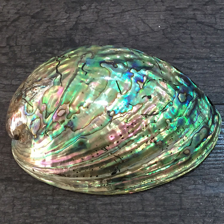 Highly Polished Natural Rainbow Color Abalone Shell Flashy Light Large Size Abalone Shells With Wholesale Price