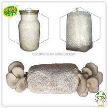 king oyster mushroom spawn growing kit