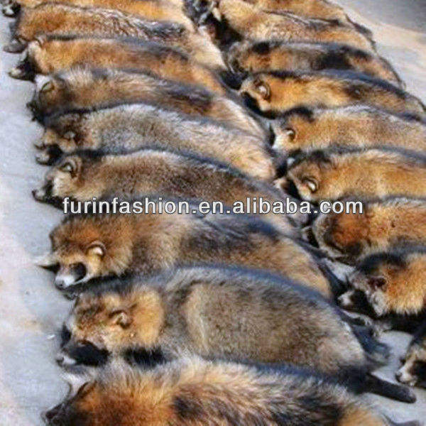 Raccoon Dog Skin