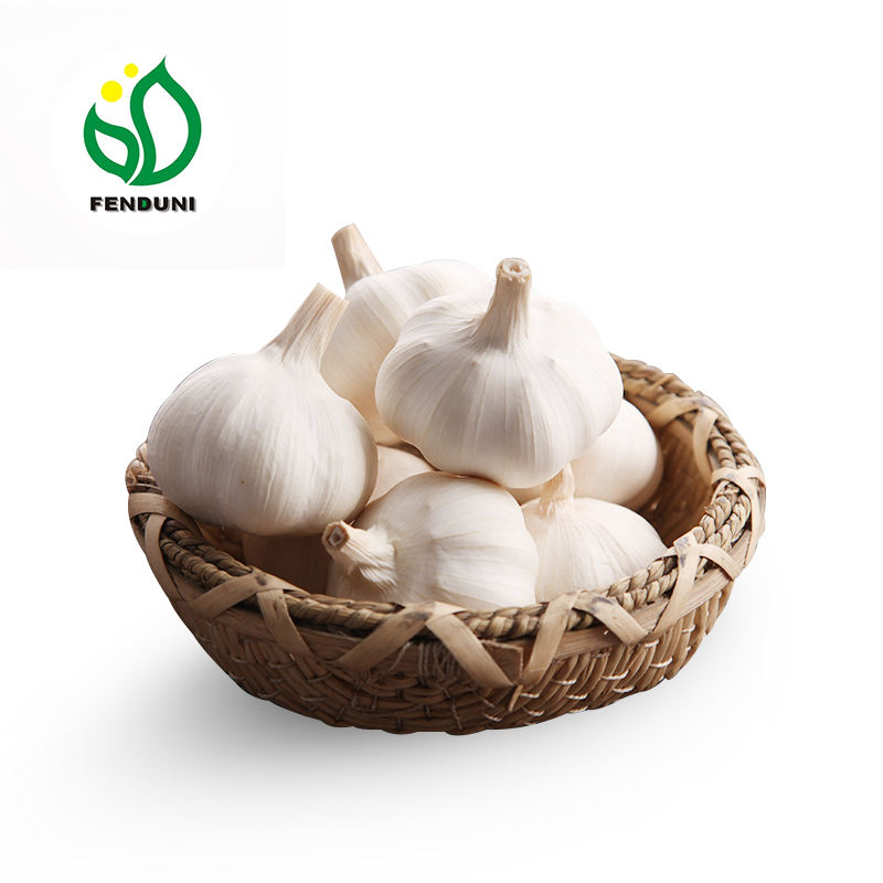 Specification Fresh Ginger And Fresh Garlic --Top Quality & Competitive Price