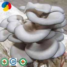 Oyster mushroom spawn to sale suppliers price