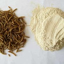 defatted protein powder from the mealworm larvae as for rare reptiles feed