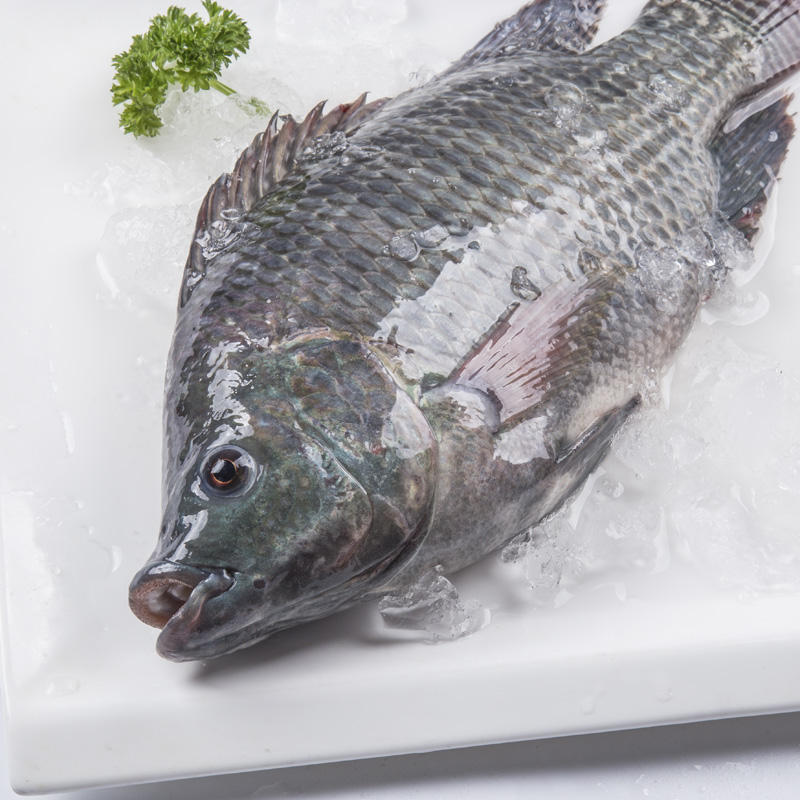 Live Fish Best Fresh Frozen Black Gutted Scaled Whole Tilapia (oreochromis mossambicus)