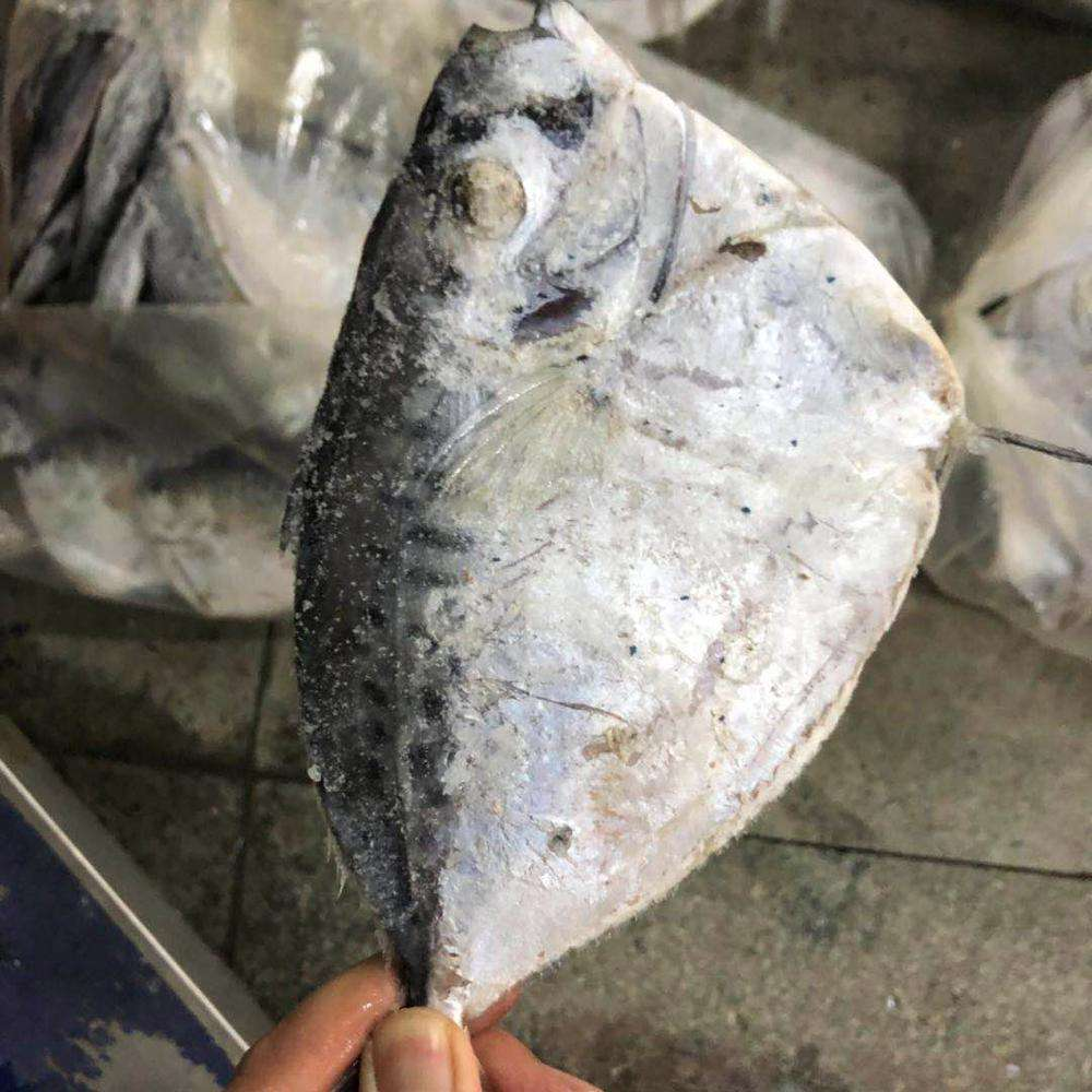 Whole round cheap seafrozen 5-7 pcs moonfish seafood