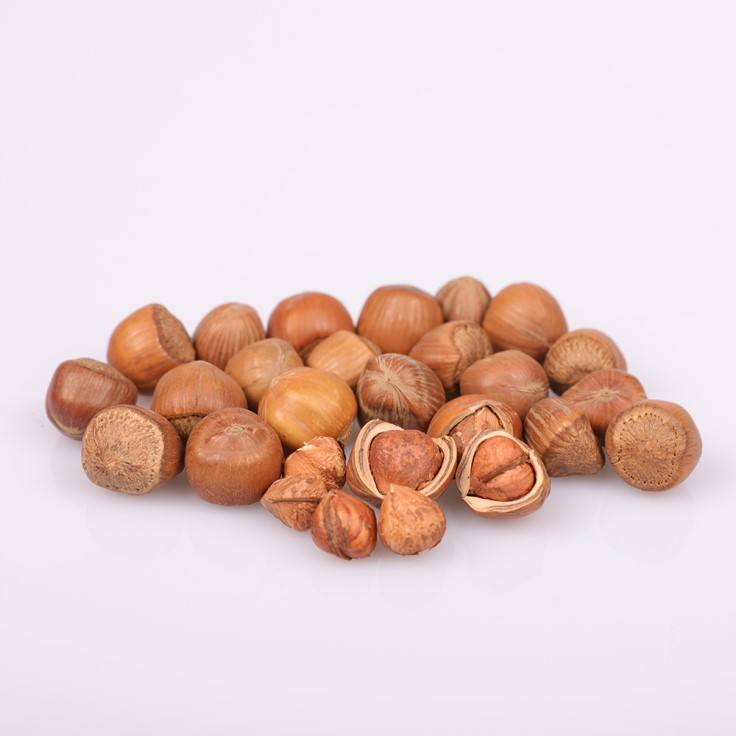 Best-selling Wholesale Dried Cheap organic hazelnut in shell for sale