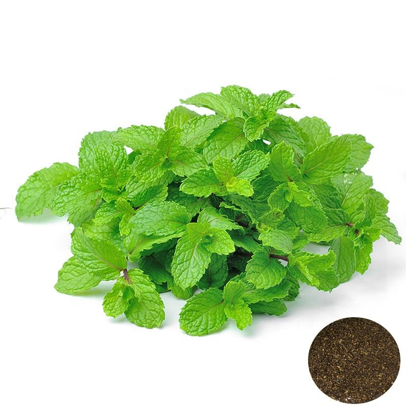 Factory Supply High Quality Herb Mint Peppermint Plant Seeds For Growing Mentha Haplocalyx Seeds