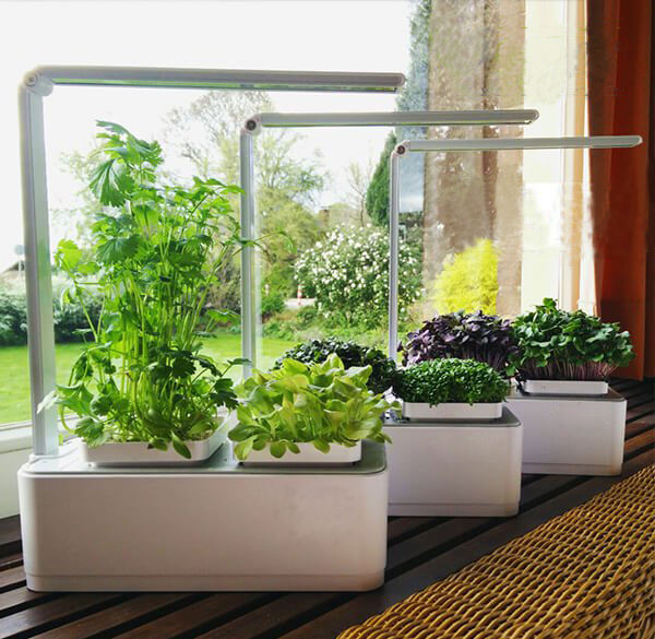 mini garden chepaer than click and grow mini smart garden