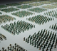 500 pcs Military Plastic Toy Soldiers Army Men 5cm Figures & Accessories Play set