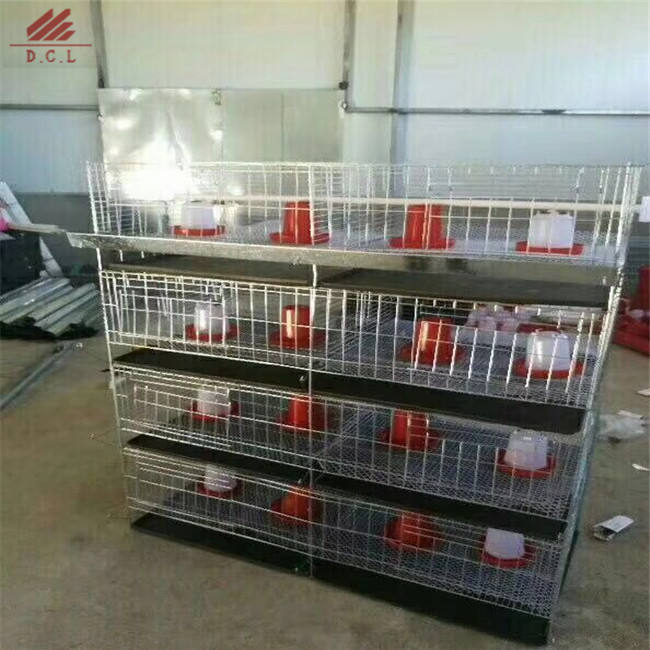 big discount layer chicken cage with chicken farm for poultry equipment