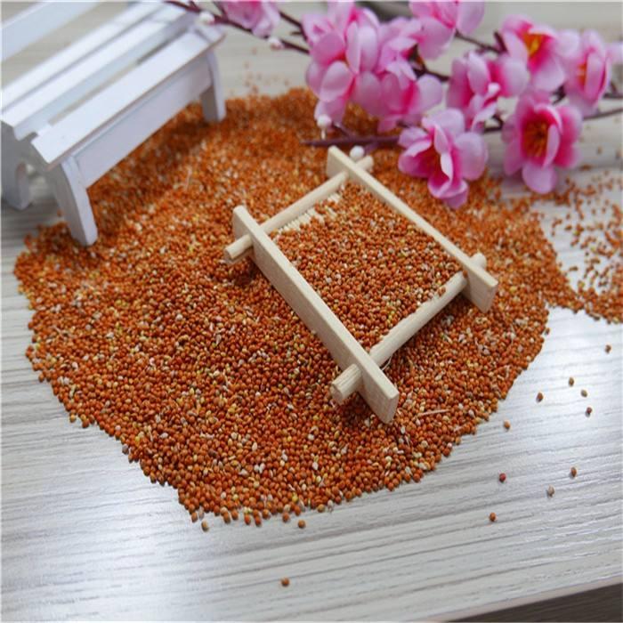 Painço vermelho chinês para a alimentação, pássaro sementes