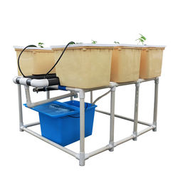 Hydroponic culture dutch bucket growing systems