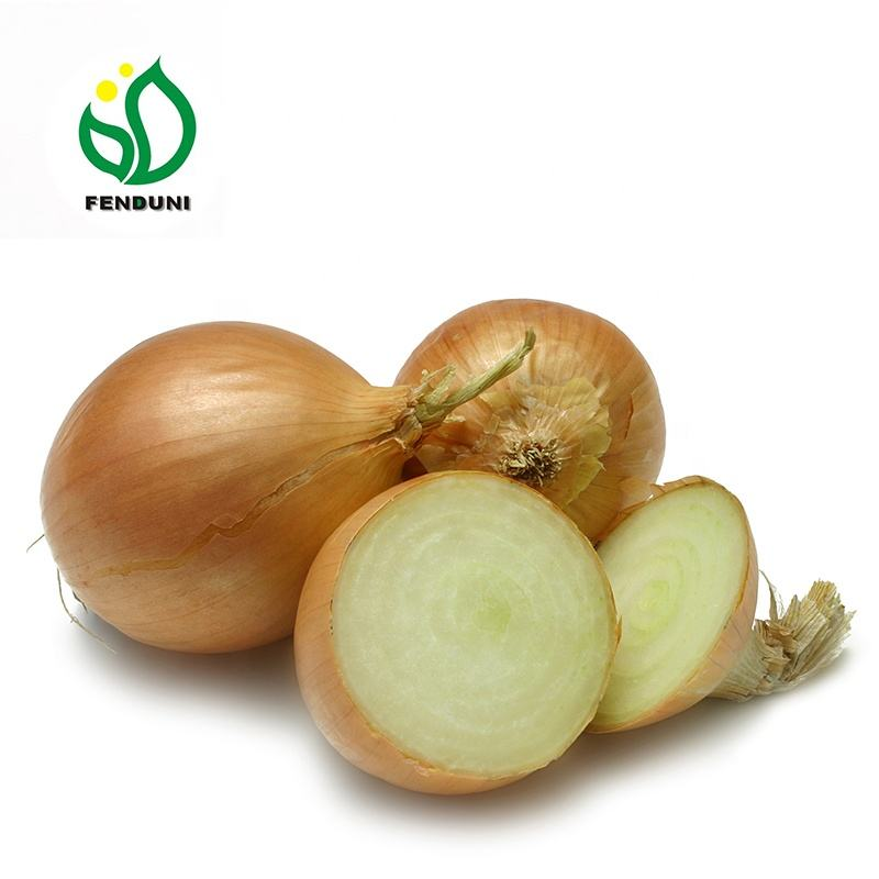 Fresh Cheap Yellow Onion Exporter