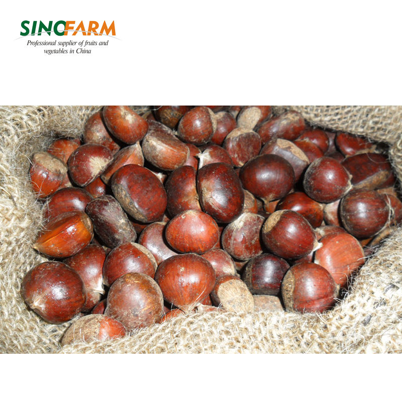 Organic fresh and dry chestnut wholesale
