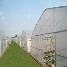 Commercial Low Cost Single Span Greenhouse/ Tunnel Film Greenhouse