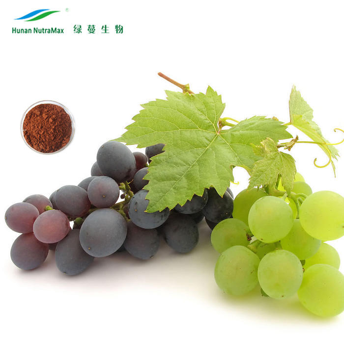 Golden Supplier Pure Natural Grapeseed Extract Powder 95% OPC Proanthocyanidins