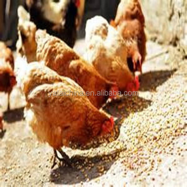 chicken feeds raw material animal feeds