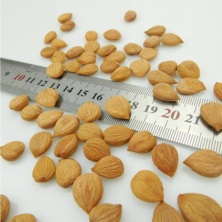 Fresh crop dried Almond / Raw Organic Almond Grade A