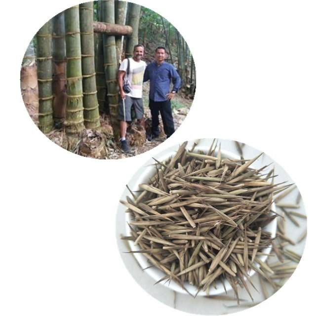 Ju zhu Best price chinese Giant moso bamboo seeds for sale